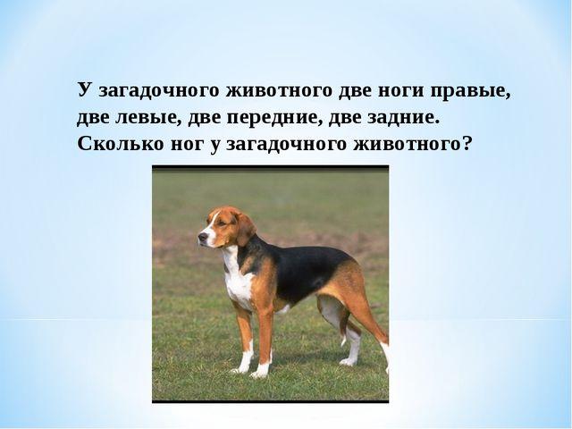 У загадочного животного две ноги правые, две левые, две передние, две задние....