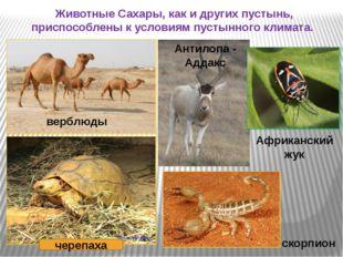 Животные Сахары, как и других пустынь, приспособлены к условиям пустынного кл