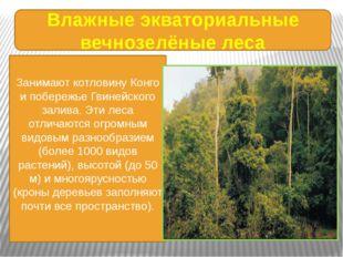 Влажные экваториальные вечнозелёные леса Занимают котловину Конго и побережье