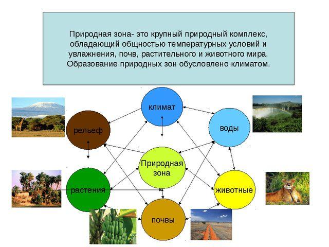 Природная зона- это крупный природный комплекс, обладающий общностью температ...
