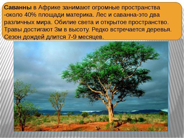 Саванны в Африке занимают огромные пространства -около 40% площади материка....