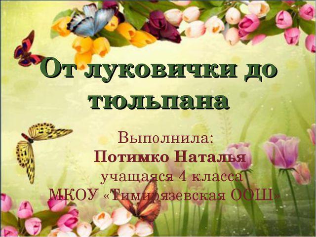 От луковички до тюльпана Выполнила: Потимко Наталья учащаяся 4 класса МКОУ «Т...