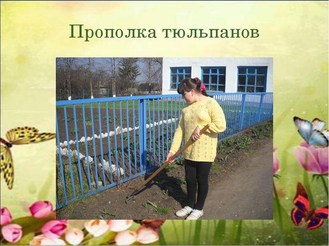 Прополка тюльпанов
