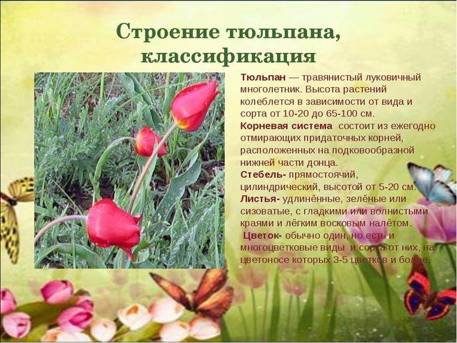 Строение тюльпана, классификация Тюльпан — травянистый луковичный многолетник...