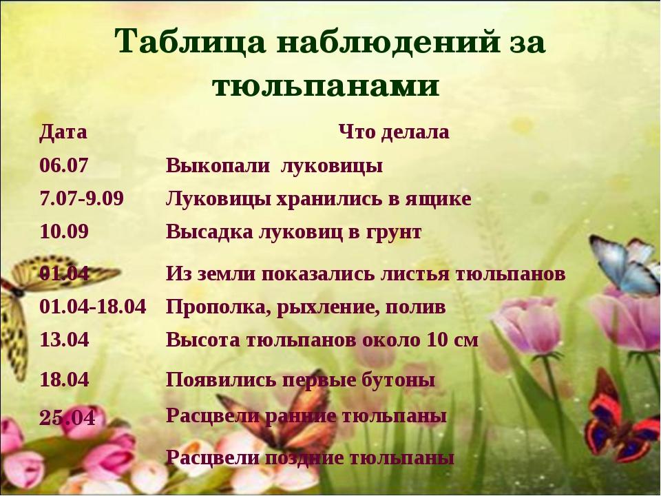 Таблица наблюдений за тюльпанами