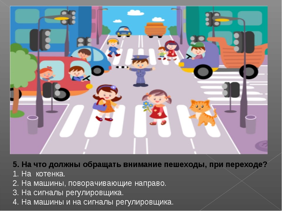 5. На что должны обращать внимание пешеходы, при переходе? 1. На котенка. 2....