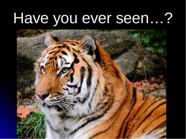 Have you ever seen…?