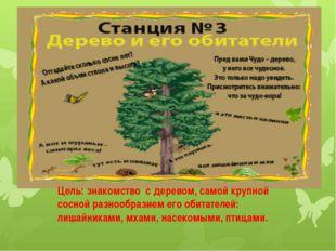 Цель: знакомство с деревом, самой крупной сосной разнообразием его обитателей