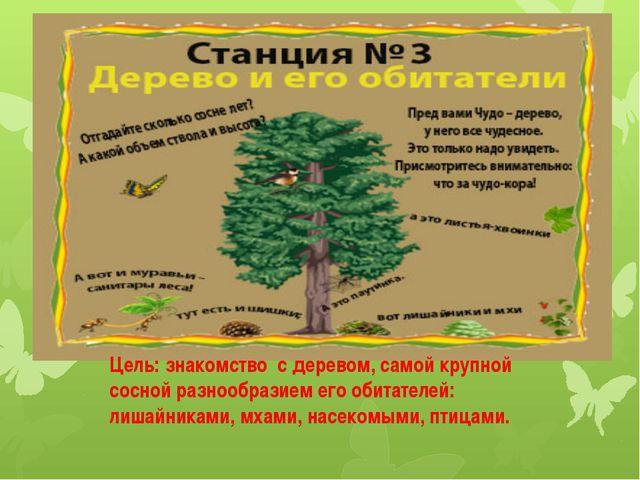 Цель: знакомство с деревом, самой крупной сосной разнообразием его обитателей...