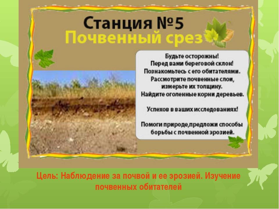 Цель: Наблюдение за почвой и ее эрозией. Изучение почвенных обитателей