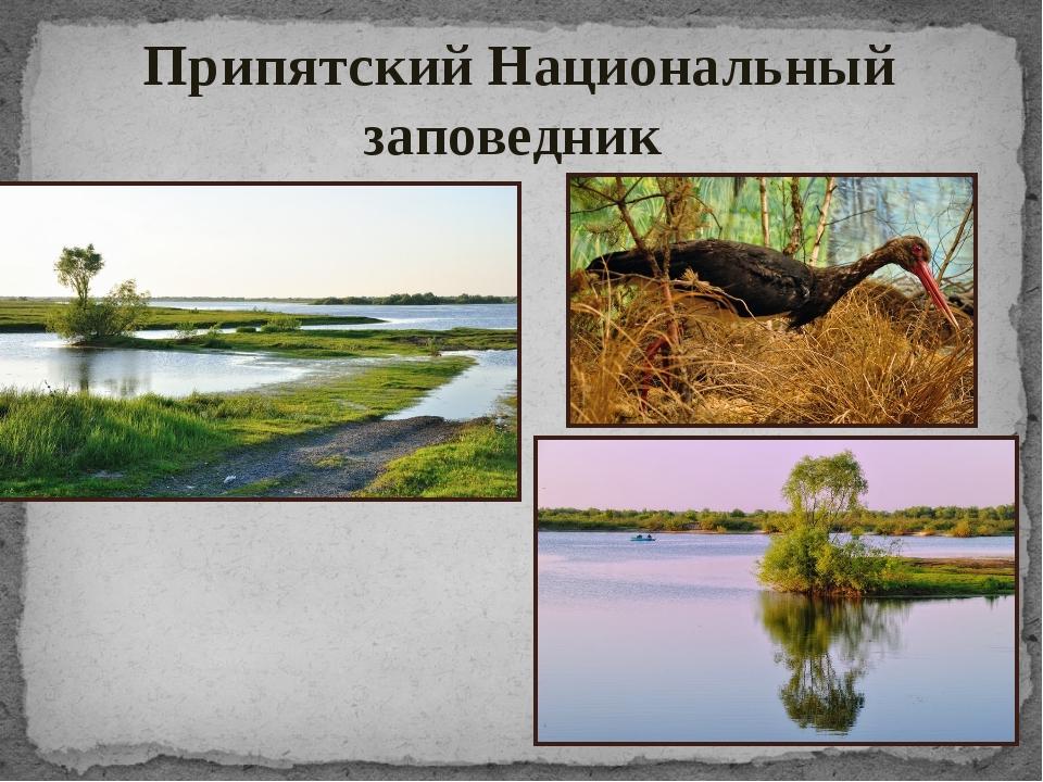 Припятский Национальный заповедник