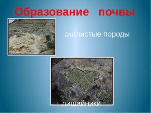 скалистые породы лишайники Образование почвы