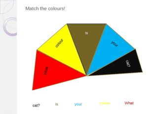 Match the colours! What colour is your cat? What colour is your cat? cat?