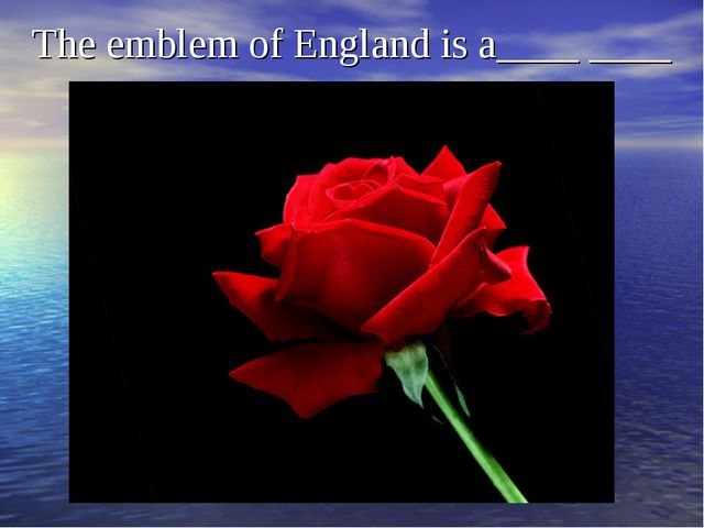 The emblem of England is a____ ____