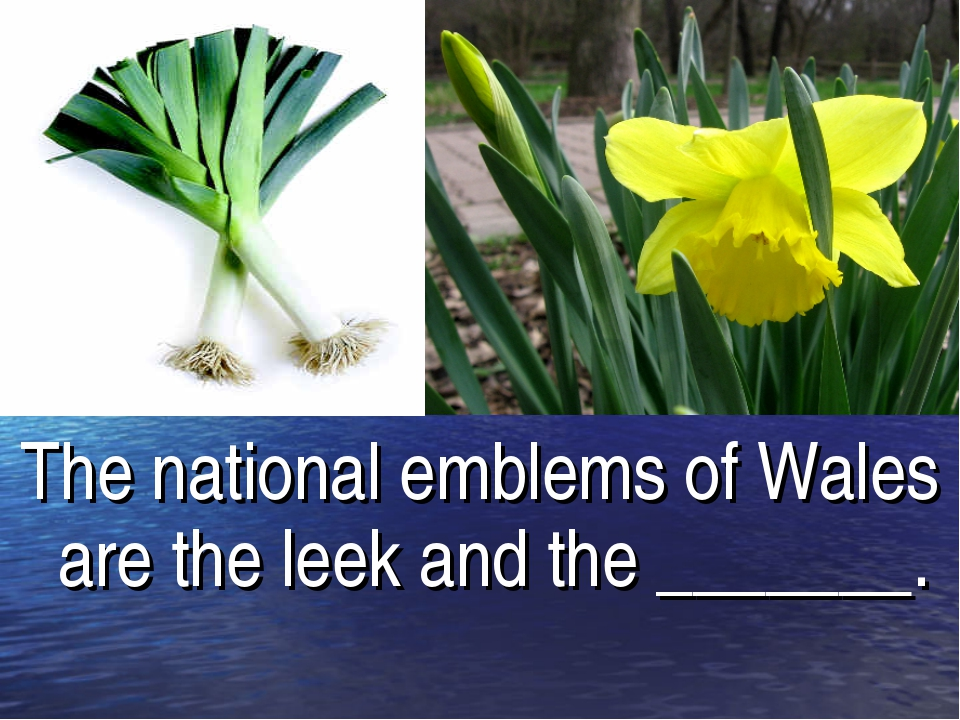 The national emblems of Wales are the leek and the _______.