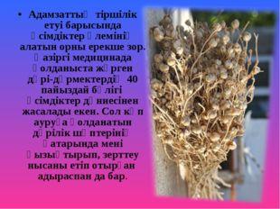 Адамзаттың тіршілік етуі барысында өсімдіктер әлемінің алатын орны ерекше зор