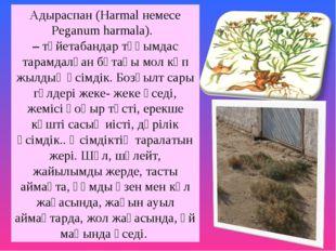 Адыраспан (Harmal немесе Peganum harmala). –түйетабандар тұқымдас тарамдалғ