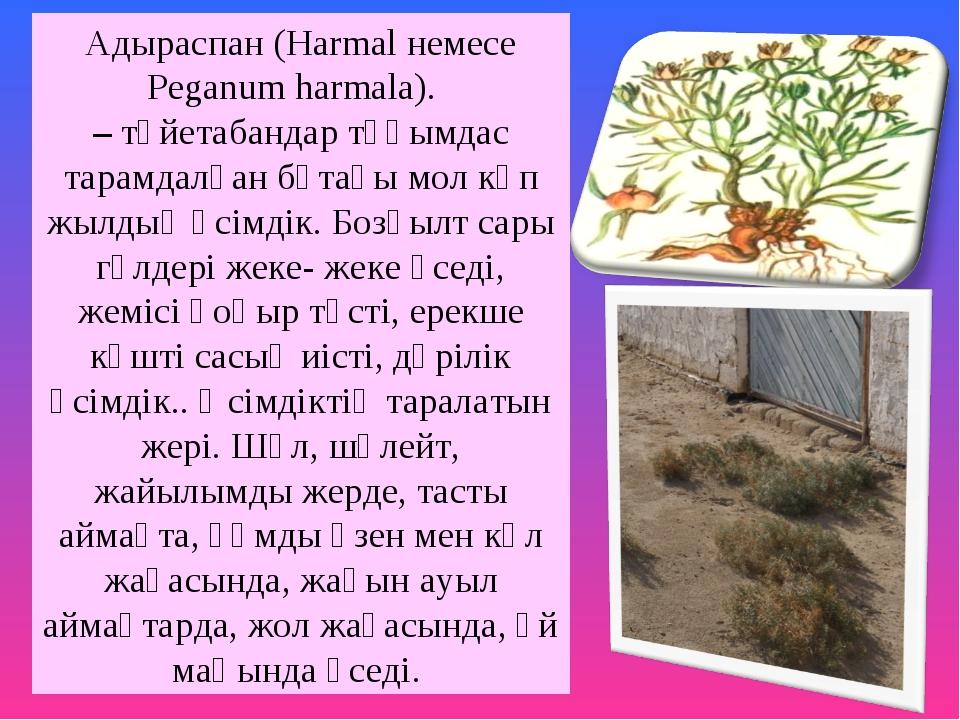 Адыраспан (Harmal немесе Peganum harmala). –түйетабандар тұқымдас тарамдалғ...