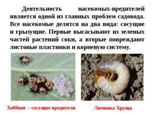 Деятельность насекомых-вредителей является одной из главных проблем садовода.