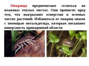 Мокрицы предпочитают селиться во влажных теплых местах. Они приносят вред тем