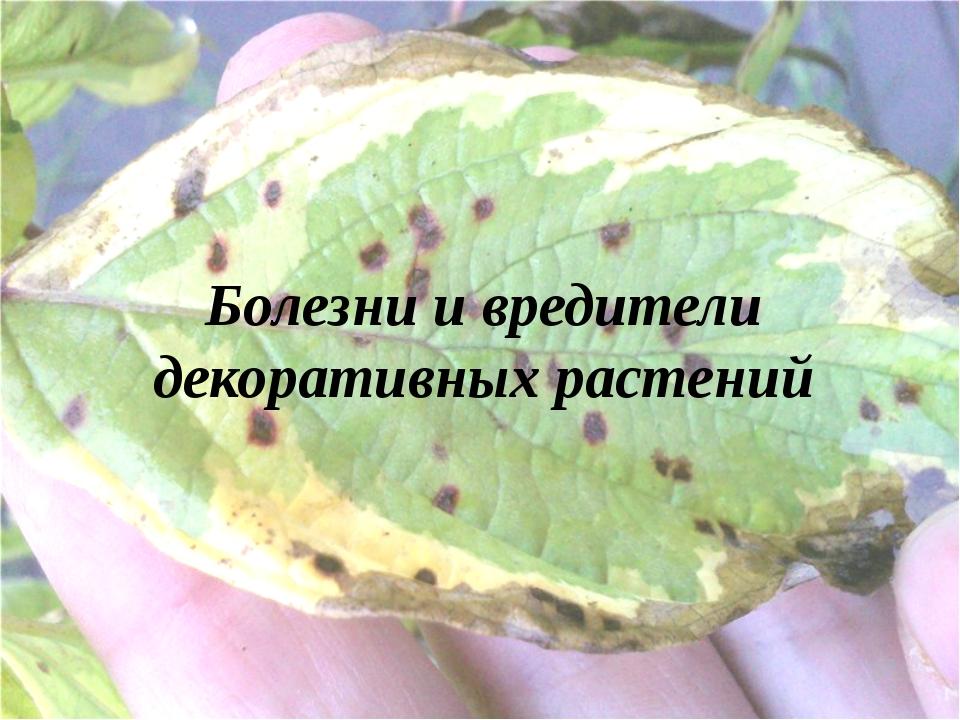 Болезни и вредители декоративных растений