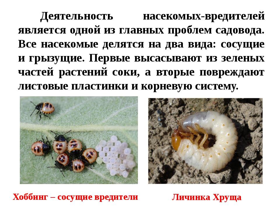 Деятельность насекомых-вредителей является одной из главных проблем садовода....