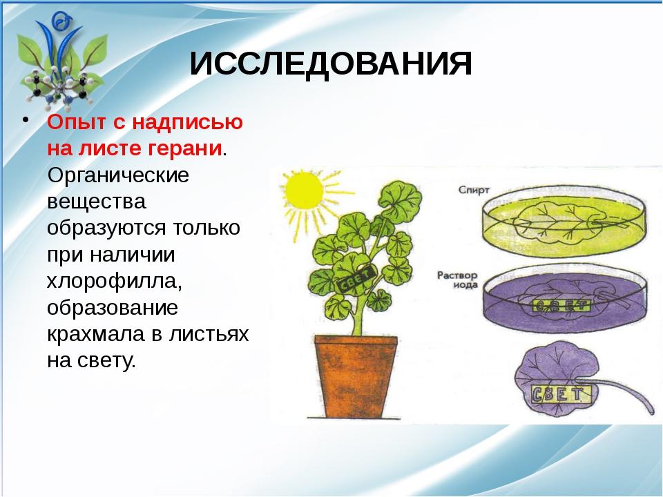 ИССЛЕДОВАНИЯ Опыт с надписью на листе герани. Органические вещества образуютс...