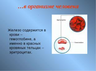 …в организме человека Железо содержится в крови – гемоглобине, а именно в кра
