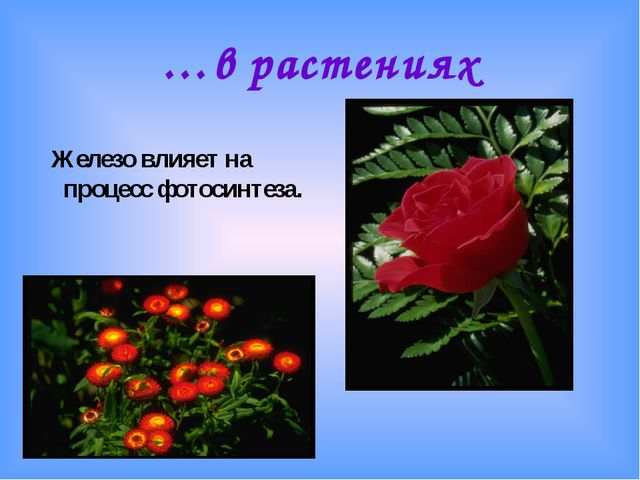 …в растениях Железо влияет на процесс фотосинтеза.