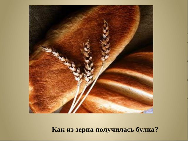 Как из зерна получилась булка?