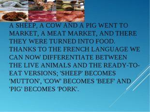 ASHEEP, ACOWAND APIGWENT TO MARKET, A MEAT MARKET, AND THERE THEY WERE T