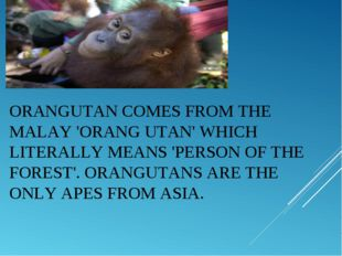ORANGUTANCOMES FROM THE MALAY 'ORANG UTAN' WHICH LITERALLY MEANS 'PERSON OF
