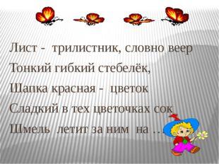 Лист - трилистник, словно веер Тонкий гибкий стебелёк, Шапка красная - цве