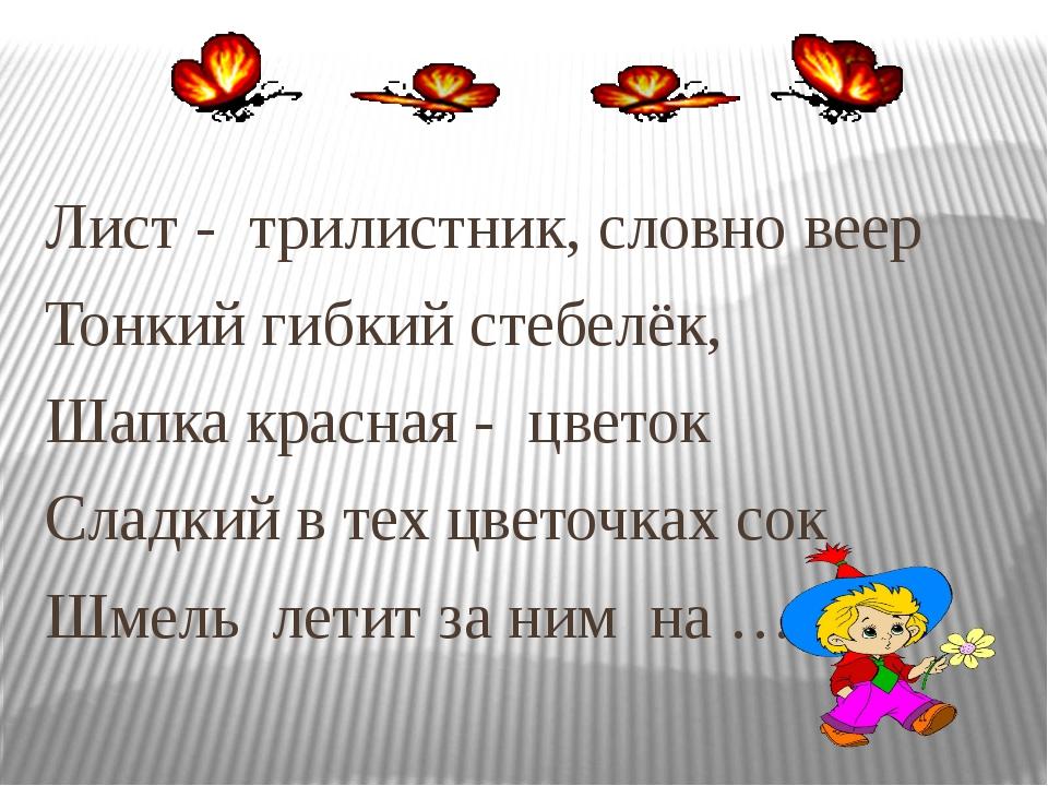 Лист - трилистник, словно веер Тонкий гибкий стебелёк, Шапка красная - цве...