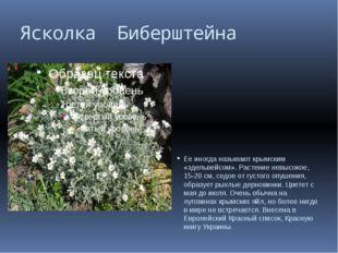 Ясколка Биберштейна Ее иногда называют крымским «эдельвейсом». Растение невыс