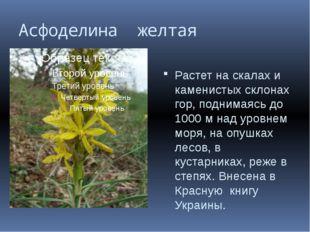Асфоделина желтая Растет на скалах и каменистых склонах гор, поднимаясь до 10