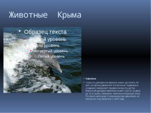 Животные Крыма Афалина. Скорость дельфинов-афалин может достигать 40 км/ч, во