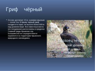 Гриф чёрный Его вес достигает 12 кг, а размах крыльев — почти 3 м. В Крыму че