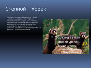 Степной хорек Один из представителей хищников, степной хорек внесен в Красную