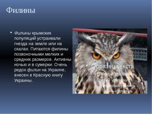 Филины Филины крымских популяций устраивали гнезда на земле или на скалах. Пи