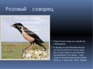 Розовый скворец Перелетная птица из семейства Скворцовых В Крыму на протяжени
