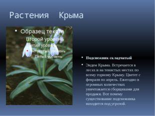 Растения Крыма Подснежник складчатый Эндем Крыма. Встречается в лесах и на те