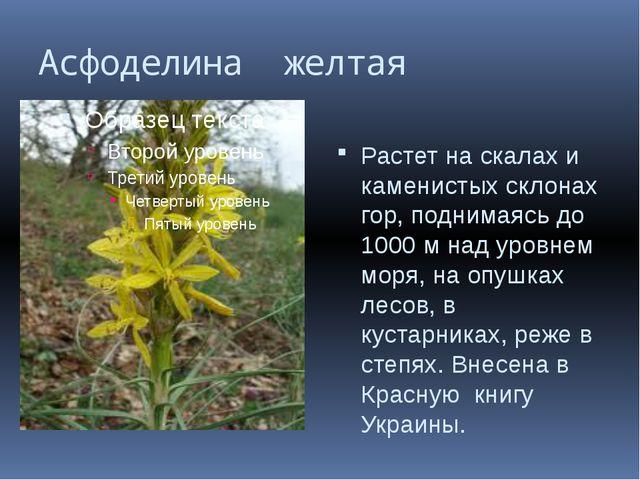 Асфоделина желтая Растет на скалах и каменистых склонах гор, поднимаясь до 10...