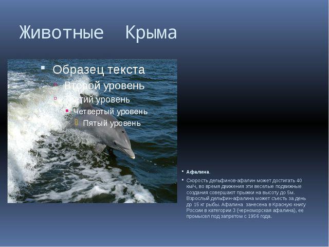 Животные Крыма Афалина. Скорость дельфинов-афалин может достигать 40 км/ч, во...