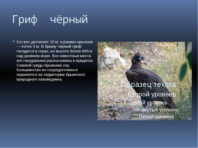 Гриф чёрный Его вес достигает 12 кг, а размах крыльев — почти 3 м. В Крыму че...
