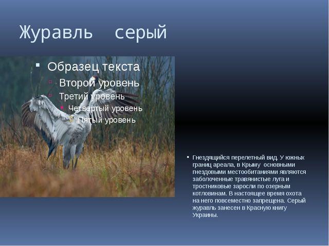 Журавль серый Гнездящийся перелетный вид. У южных границ ареала, в Крыму осно...