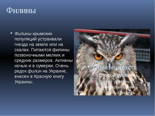 Филины Филины крымских популяций устраивали гнезда на земле или на скалах. Пи...