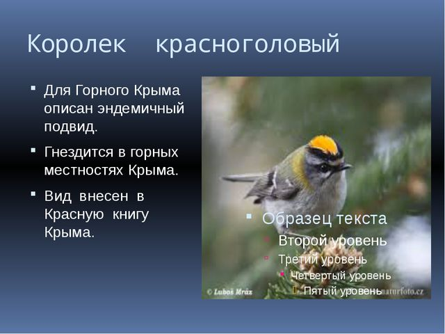 Королек красноголовый Для Горного Крыма описан эндемичный подвид. Гнездится в...