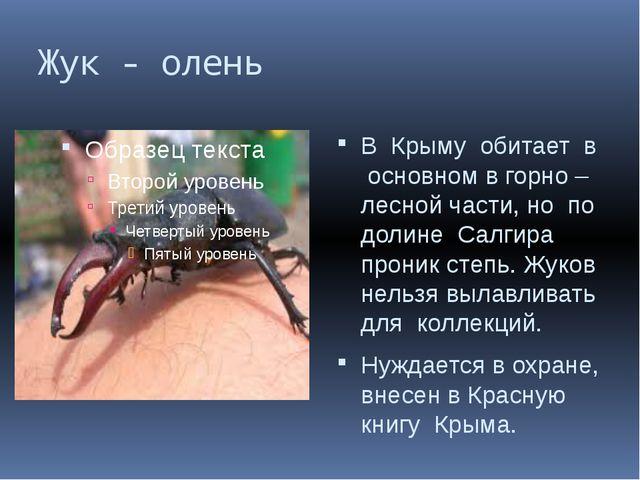 Жук - олень В Крыму обитает в основном в горно – лесной части, но по долине С...