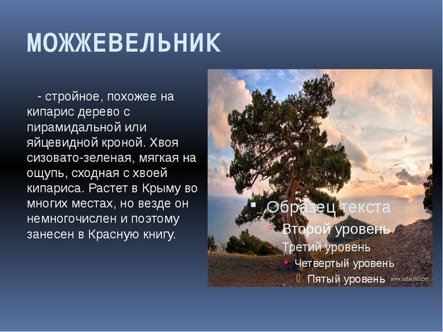 МОЖЖЕВЕЛЬНИК - стройное, похожее на кипарис дерево с пирамидальной или яйцеви...